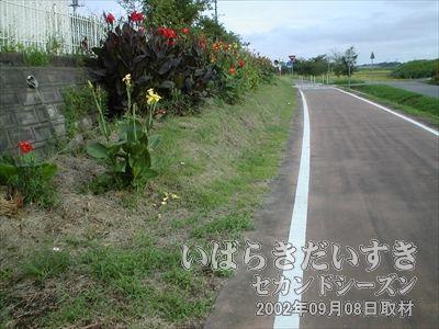 【坂田駅 ホーム】一見、花壇のようなつくりです。最初は気づかずに通り過ぎてしまいました。