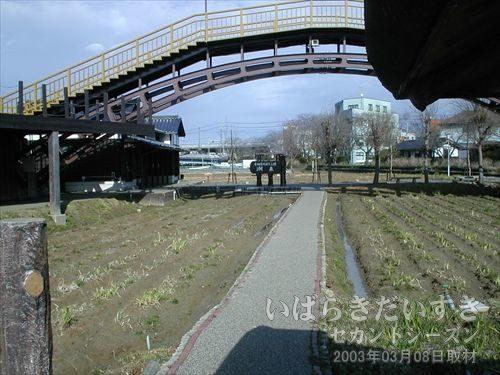 あやめ園をまたぐように架かる大きな橋<br>前川あやめ園を大きくまたぐ橋。モニュメントかと思っていたら、本当に渡る事ができるようです。