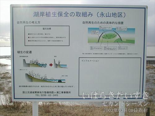 湖岸植生保全の取り組み