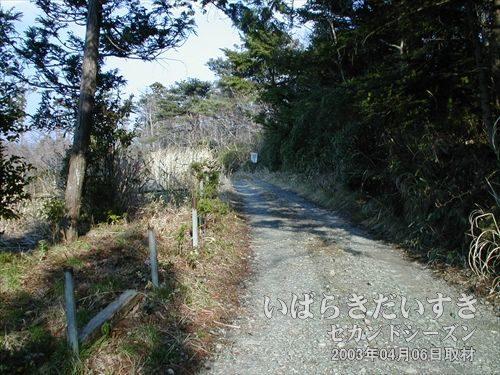 整備されていない道を更に進む<br>道なりに更に歩いてみます。