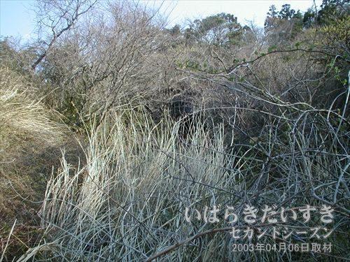常磐線 旧トンネル 台ノ山トンネル(広野駅方面)<br>藪の向こうにうっすらと旧トンネル 台ノ山トンネルが見えるのですが、きつい藪ととげに断念します。