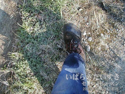 藪の中の側溝に足を突っ込む<br>藪の中には旧線路の側溝があったようで、足を突っ込んでしまいました。。