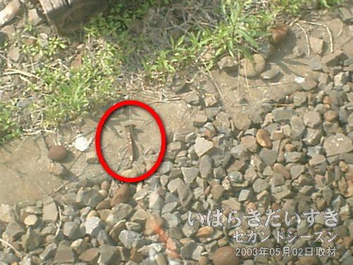 車両の眼下に「犬釘」<br>高浜駅にて特急の通過待ちの間、何気なく電車の窓から下を見ると「犬釘(いぬくぎ)」が落ちていました。