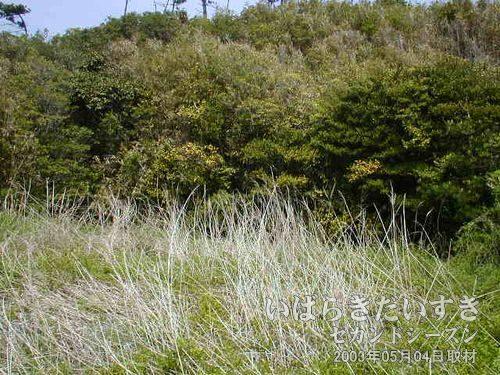 藪の中<br>こんもりと茂った、この藪と木々の間に台ノ山トンネルがあると推測し探すも見つかりませんでした。