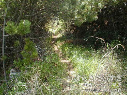 踏みならされた細い道を進みます<br>常磐線の線路がある方を見ると、踏みならされた跡があります。