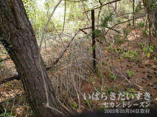 朽ち落ちた金網<br>かなり古い金網で、金網に枯れた草や蔦などが絡み合っています。