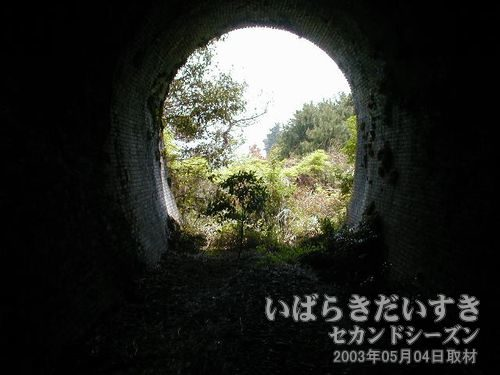 トンネル内から振り返って撮影<br>トンネルを通り抜けた汽車は、左手に広がる海の景色に驚いた事でしょう。