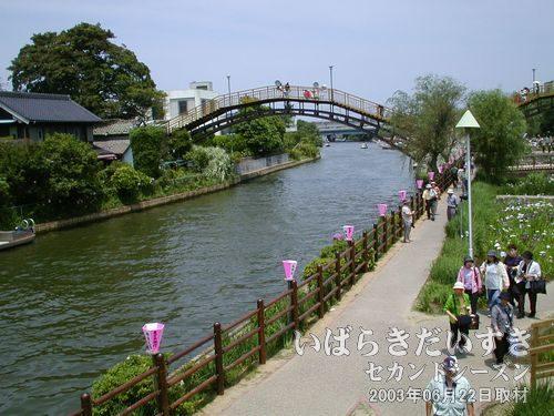 前川<br>この前川という川を持ってして、「前川あやめ園」と呼ばれているんですね。