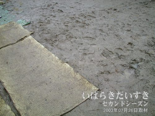 ぐちょぐちょな会場<br>昨晩降った雨で、メイン会場の足下はぬかるみまくりです。敷かれた段ボールも意味無しです。