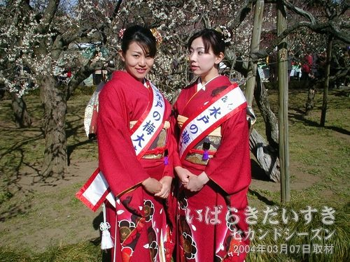 梅梅ガールズ2004(水戸の梅大使)<br>梅梅ガールズは、今年も満開だ~~~\(^O^)/~~ばんざーい!。