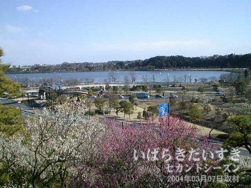 偕楽園 仙奕台(せんえきだい)から千波湖を眺める