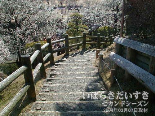階段を下ります<br>偕楽園は山のような地形。園内移動の際は、階段や傾斜路を上ったり下りたります。