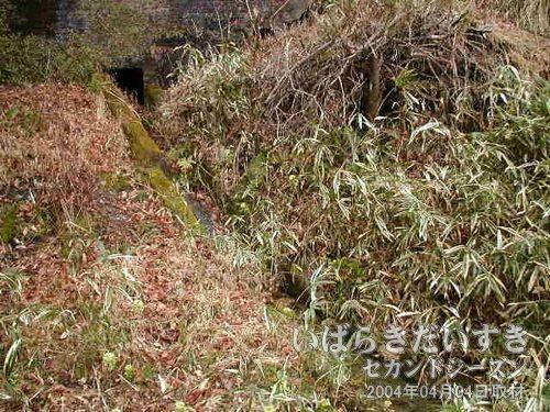 廃線脇の溝(側溝)に注意!<br>藪に包まれていますが、線路わきには、排水用の溝があります。