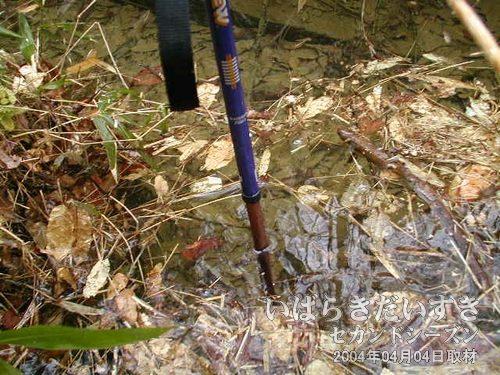 側溝はかなり深い<br>深さは30cmくらいあります。廃線訪問時には、藪にむやみに入っては危険です。