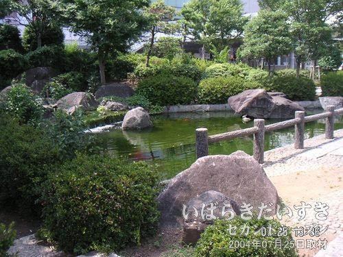 土浦駅前の広場の池<br>日本庭園のような広場があります。昔の駅前再開発の地主さん関係かな?