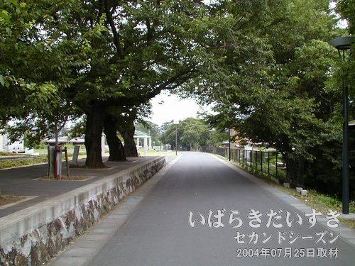 筑波鉄道の本線があった線路跡<br>同じく岩瀬駅方面を眺めています。