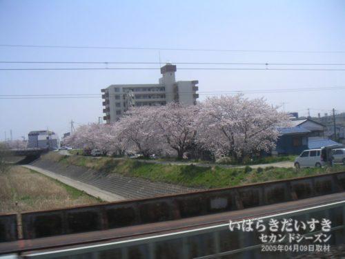 【 土浦桜川沿いの桜 】<br>間もなく土浦駅、というところで桜川を渡る常磐線の車窓から撮影。川岸に咲く桜が見えます。