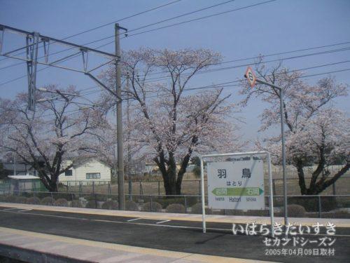 【 JR羽鳥駅の桜 】<br>羽鳥駅ホーム沿いにも、桜が咲いています。