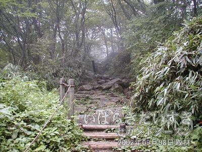 【山道】<br>男体山山頂駅から女体山を徒歩で移動とは言っても、やはり山なのでこういった山道もあります。