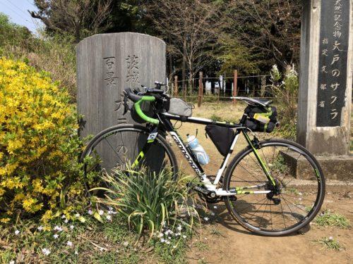 茨城百景_大戸の桜