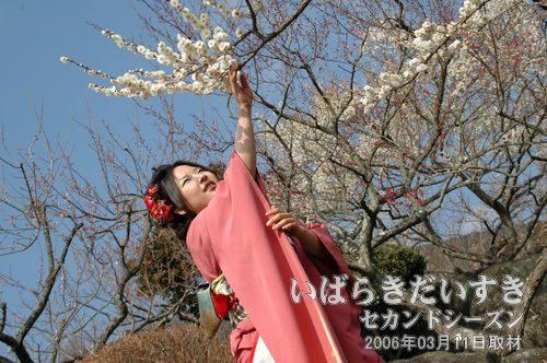 筑波山_梅まつり<br>つくばの梅娘による、撮影会。生涯で1,2を争うくらい、楽しい撮影会だった。2006年03月。