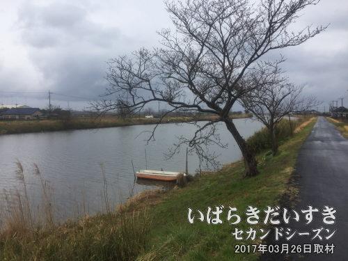 新利根川の釣り場<br>新利根川は釣り場として有名で、休日ともなるとバス釣りなどの釣り愛好家で賑わいます。レンタルボート屋などもあります。