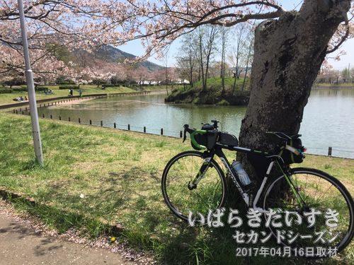 北条大池_桜の咲く頃(2017年04月)<br>近くには平沢官衙遺跡があります。筑波山クライムヒル不動峠の入口でもあります。
