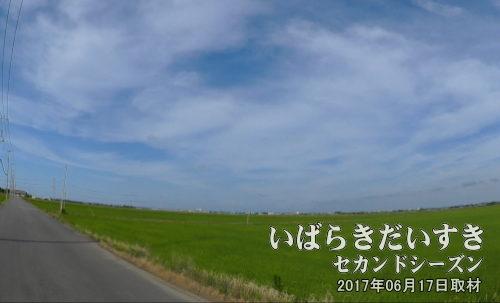 茨城県稲敷市の水田地帯<br>広大な水田が存在するのも、利根川水系(新利根川)の安定した治水によるものです。