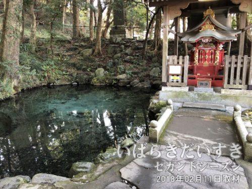 泉が森 大井