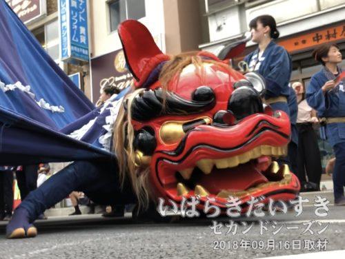泉町の獅子が、めっちゃ低い!!低すぎるよ!!