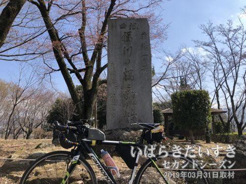 茨城百景_謡曲桜川の桜と富谷観音