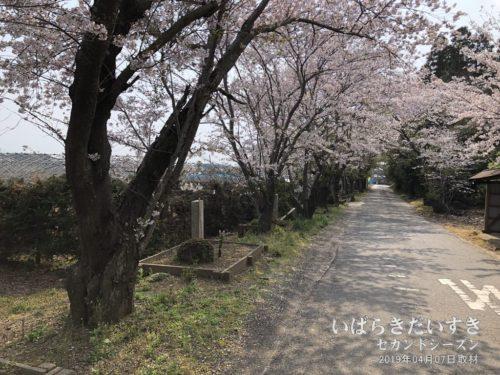 茨城百景 包括風景 十三塚