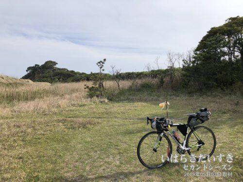 茨城百景 包括風景 いぶき樹叢