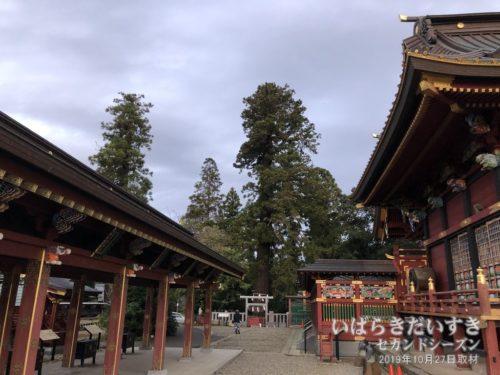 大杉神社 御神木 三郎杉
