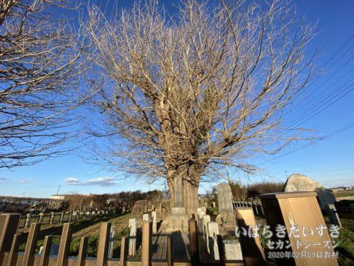 小島草庵跡:親鸞が東国に移り、最初の居住地です。