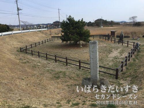 高須崎の一本松《3代目》(2016年03月撮影)
