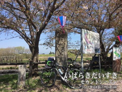 茨城百景_福岡堰