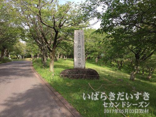 磯部桜川公園<br>磯部稲村神社に続く参道には多くの桜が植えられています。大正13年に国の名勝地に指定され、桜の名所として知られています。