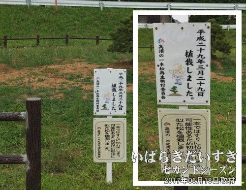 「高須の一本松再生検討委員会」による案内板<br>平成29年(2017)03月29日に植栽されました。