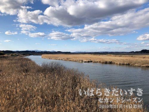 涸沼川 (一級河川)<br>涸沼の西側の涸沼川のヨシ原には、絶滅危惧種のヒヌマイトトンボが生息していると言われています。