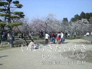 【梅も良い感じに咲いている】<br>天気も良いし、行楽日和です。