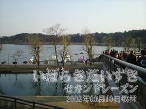 【千波湖方面に渡れる】<br>偕楽園からは県道を渡り、千波湖方面に出る事ができます。