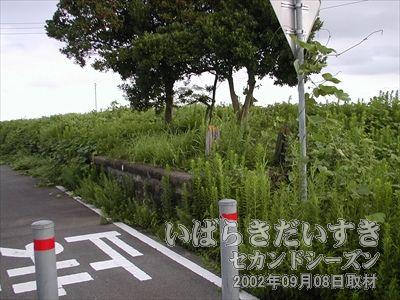 【田土部駅 ホーム】一見すると雑木林のようですが、ここも駅跡。案内板があるので分かるはず。