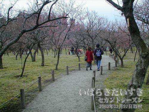 偕楽園の梅<br>梅の花がもう少し咲いていれば、園内も賑わうのでしょう。