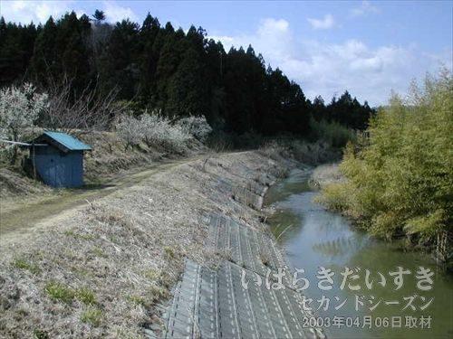 川沿いを歩く<br>道がだんだん、あぜ道となってきました。