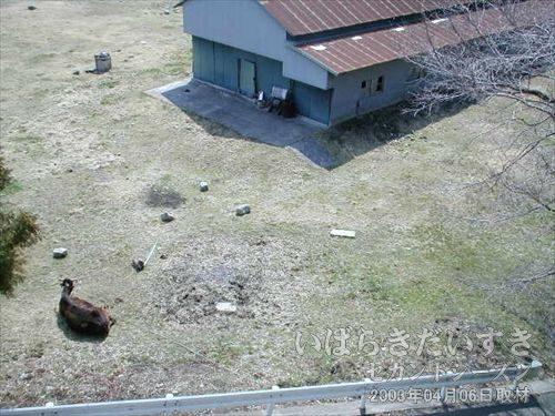 竜田駅に向かう途中<br>橋の下には、牛が放たれています。