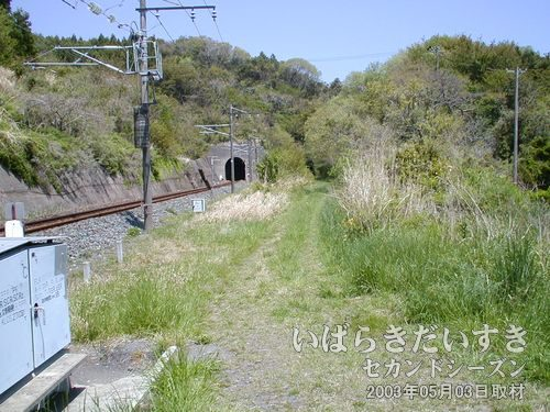 向山トンネル〔左:現行/右:旧トンネル〕<br>右手の草木に覆われているのが、旧向山トンネルです。