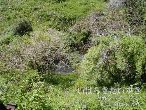 水位が低い?<br>こんもりとした木々の間から見えるのは、水面。もしかしたら、ずぶずぶの沼地状態かも!?