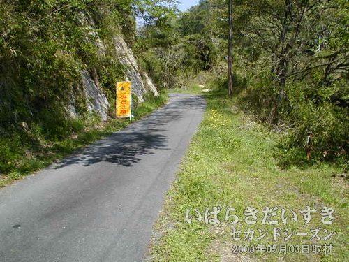県道395号から外れる小道<br>細い分岐する道を発見したので、そちらに進んでみます。方角的に、こちらに常磐線の線路があるはず。