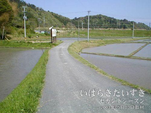 国道を右折する<br>国道から右折し、たんぼの細い道に入っていきます。
